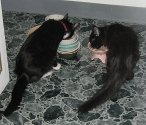 Yuki and 'Nuki